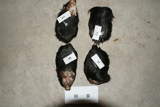 出售珍贵濒危野生动物制品案