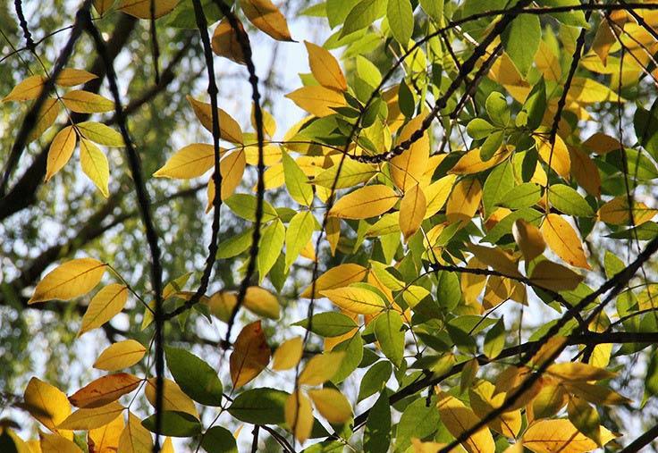 初秋之斑驳美景