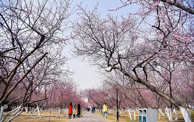 """""""锡林桃花宴·环境整治在身边""""第六届桃花节开幕"""