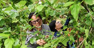 """重庆:""""农业+旅游""""带动农户脱贫增收"""