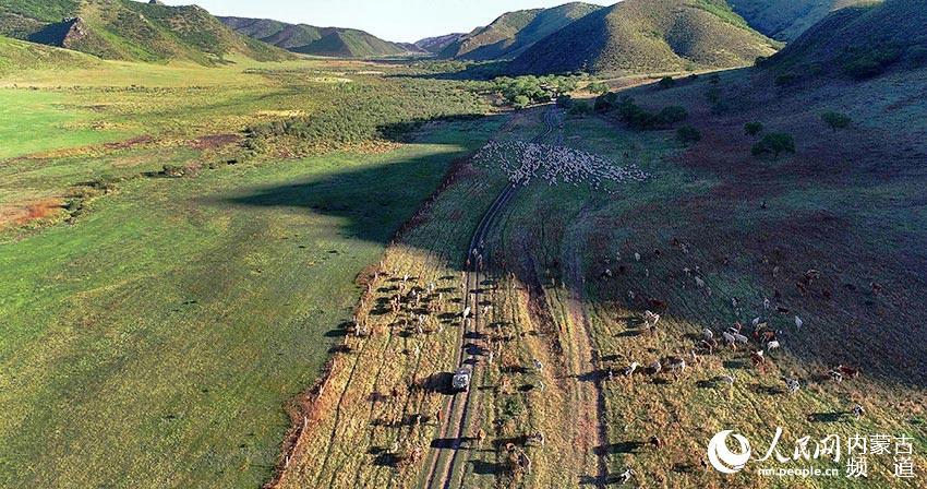 内蒙古阿鲁科尔沁旗上演草原夏季转场盛景