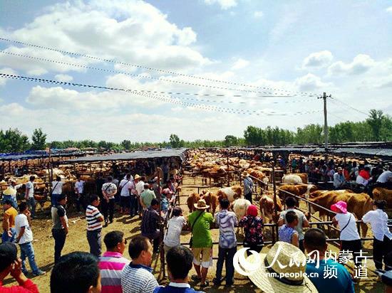 """内蒙古通辽市:村里有了""""好当家"""" 致富根基扎得牢"""