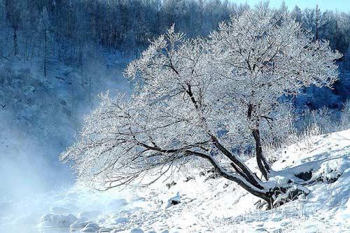 单线树木简笔画